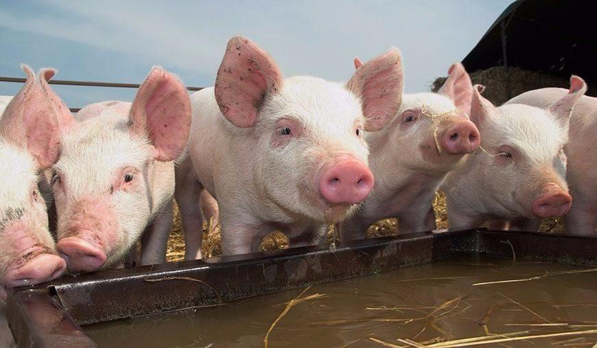 Чи правильно ви годуєте своїх домашніх тварин?