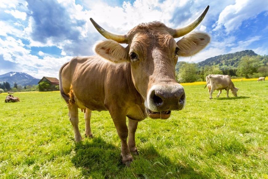 «Живина» джерело підвищення молочної продуктивності дійних корів